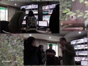 ipanda Studio Chengdu